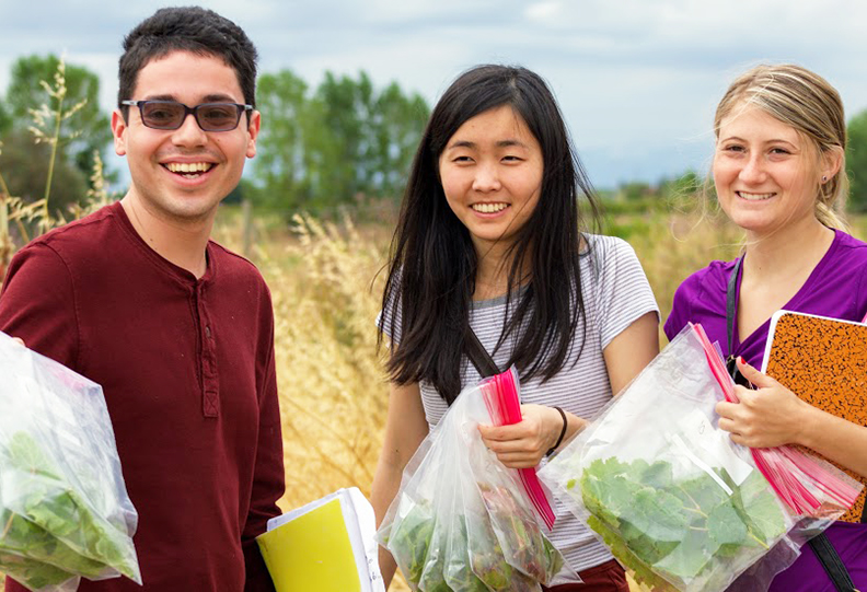 Students collect vine samples for testing in the lab.