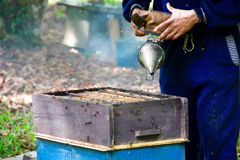 Malagasy honeybees