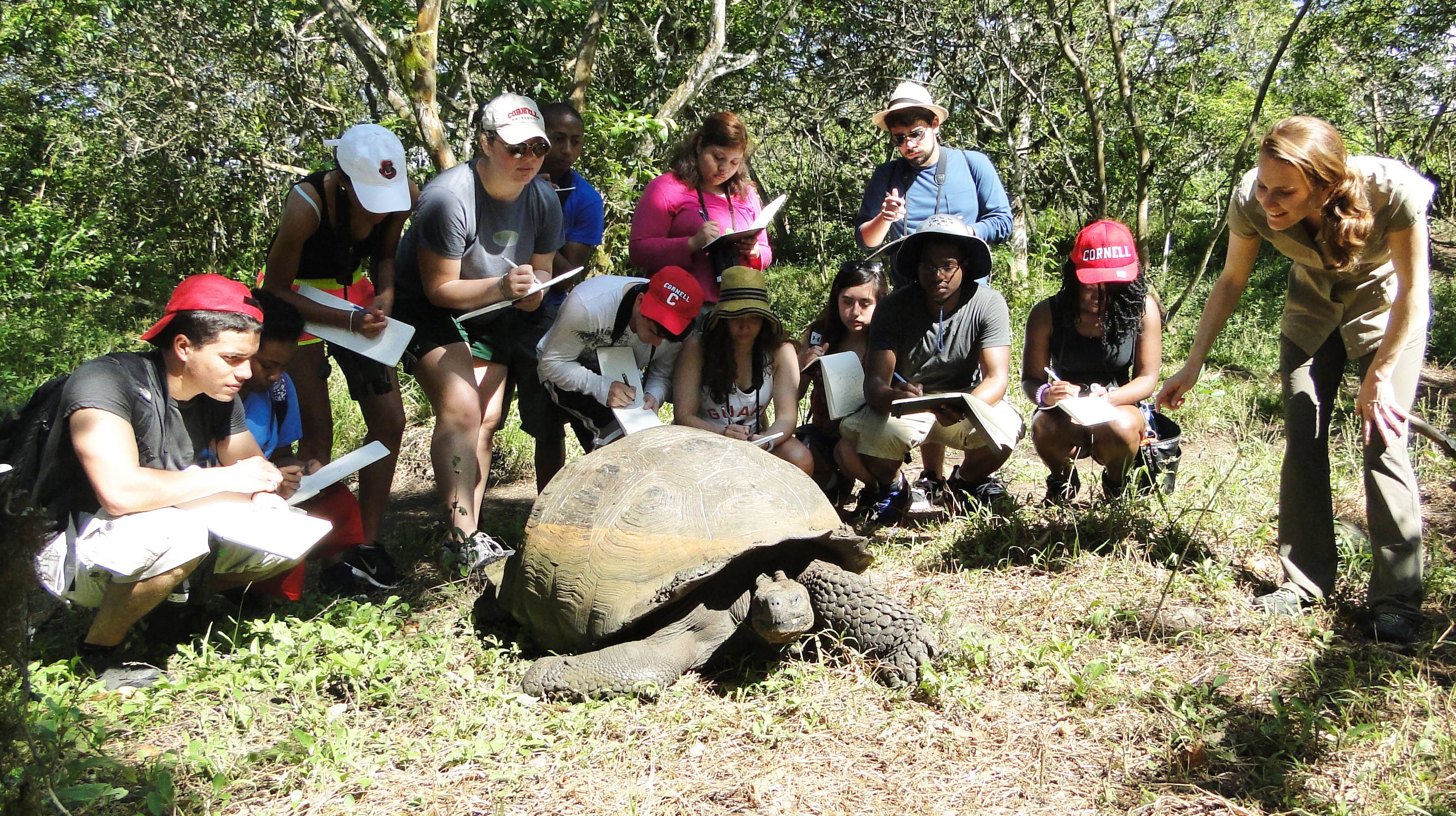 Students meet a Galapagos giant turtle